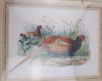 1994 Vintage Bird SCAFA-TORNABENE Art Publishing Co No. 379-16245