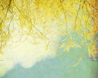 50% OFF SALE Nature Photography Wall Art Yellow Branches and Blue Sky Nature Photo Shabby Chic Decor 5x5 inch Fine Art Photography Print Wil