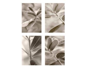 Sepia Photography Print Set, Four Foliage Leaf Art Prints, Shabby Chic Home, Neutral Decor