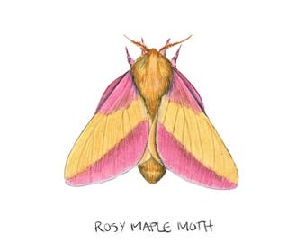 made to order rosy maple moth plush dryocampa rubicunda
