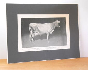 Vintage Matted Jersey Cow Print • Black and White Geo. F. Morris Champion Cow Print
