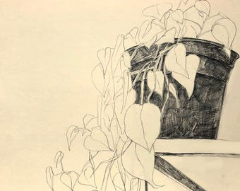 Philodendron no. 1. 8 1/2 in. x 11 in. original drawing. pencil on paper
