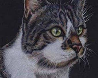 Tabby Cat 3 Art Note Card
