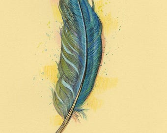 Blue Macaw Feather