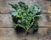 Darkibore Kale, heirloom seeds, organic vegetable seeds, organic vegetable garden, organic kale seed, heirloom kale seed, open pollinated