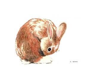 Baby Bunny Original Hand Drawn Colored Pencil Sketch
