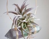 Hanging Planter, Air Plant Crystal Swing, Green and Purple Fluorite Display, Limited Edition, Gift For Green Thumb, Boho Wall Decor