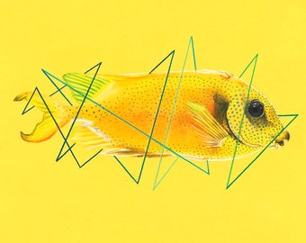 Blue Spotted Spinefoot Fish Original Drawing + FREE 5x7 Print