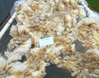 Beautiful Raw Rambouillet Cross Wool Fleece #204