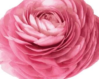 Ranunculus Pink Garden Flower  - Vinyl Decal Wall Décor