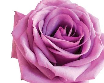 Purple Rose Garden Flower  - Vinyl Decal Wall Décor