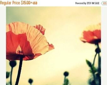 Poppy print: flower photography nature wall art hello shelley b Fine Art Flower Photography botanical art  prints Nature Photography