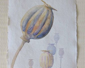 Original watercolour illustration study painting of poppy seedheads gift for gardeners