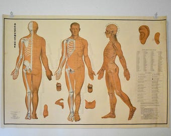 vintage Acupuncture chart - 1970's - anatomical chart - medical chart
