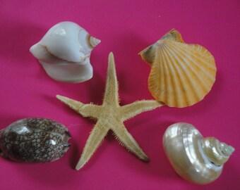 Sea Shell Seashells Lot of Starfish and Seashells.