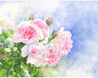 Roses watercolor painting print, 5 by 7 size, R23217, rose print of watercolor painting, pink roses watercolor print, Louise De Masi©