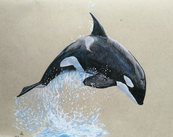 Orca original coloured pencil drawing
