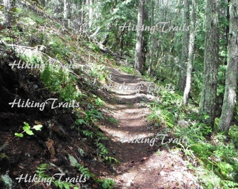 Hiking Path on Eagles Rest, DIGITAL DOWNLOAD,  forest decor, woodland style, forest art, hiking decor, Fine Art Photography by HikingTrails
