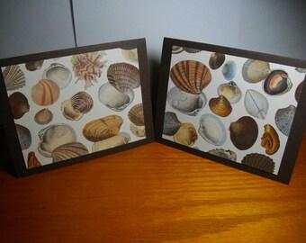 Italian Seashells 8-Card Box (from the Italian Paper Collection)