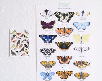 British Butterflies Print - A3 Poster - Gouache Art Poster - Botanical Art - Butterfly Illustration - British Nature Print - Butterfly Print