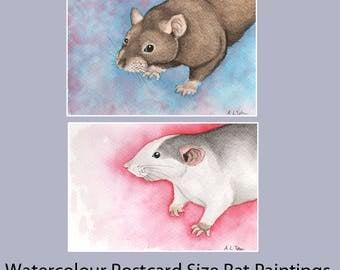 Original Watercolour Rat Paintings on A6 sized postcards - SALE, Agouti Rat, Roan Husky Rat Pictures