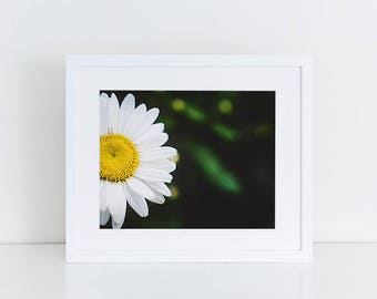 Wild Daisy - Flowers - Fine Art Photography Print