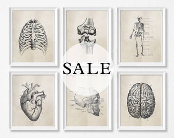 "SALE - 11x14"" - Set Of Six - Shipped Anatomy Art Prints - Brown - Office Art - Science - Medical Student - Shipped Prints - Biology"