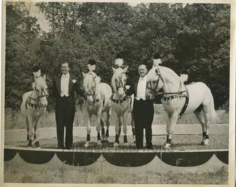 Harris Horses circus show animal trainers antique photo