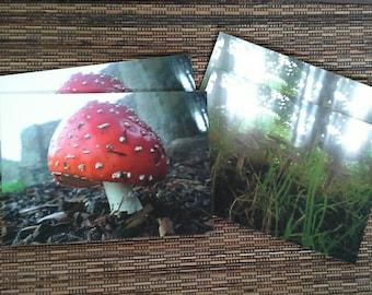 Toadstool postcards set of 4