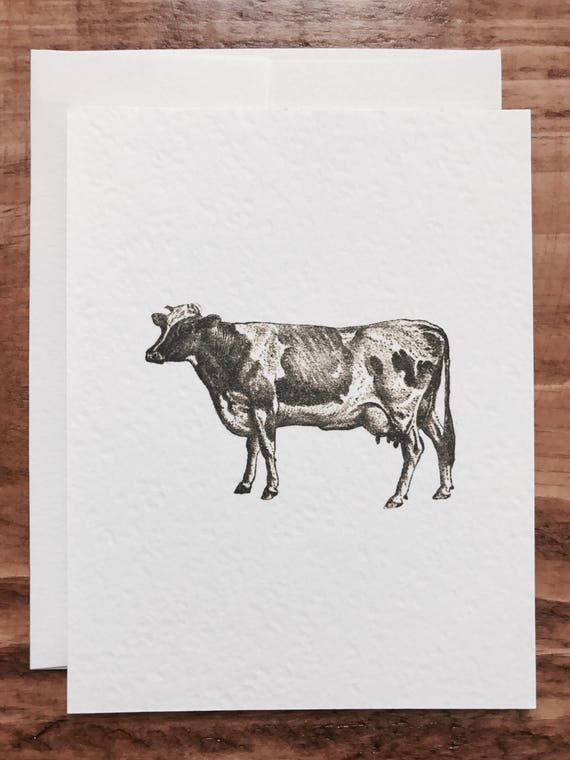 country farm cow notecards 8 count