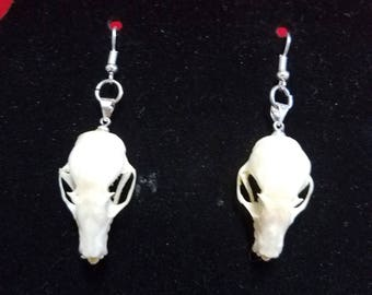REAL Taxidermy Large Bat Skull & Earrings-Gothic-goth-pagan-Dracula-gothic-oddity-macabre-witchcraft