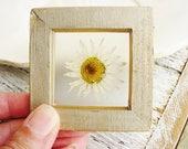 Real Daisy Art, Framed Botanical Art, Tiny Daisy Magnet, Nature Lovers, Minimalist Decor, Wall and Shelf Art, Wedding Favors, Garden Gift