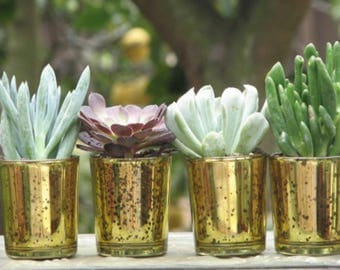 20 Wedding Favors Mini plants in Gold Glass Containers 2 inch pots