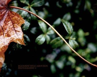 Fallen Leaf