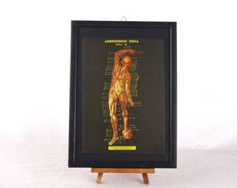Muscular System Poster, Anatomy Poster, Human Anatomy Print, Medical Poster, Human Biology Poster, Medical Wall Art, Anatomy Art, Anatomy