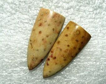 Long Petrified Palm Wood cabochon pair
