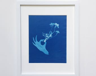 Pick a flower, Queen Anne's Lace -original cyanotype 8x10