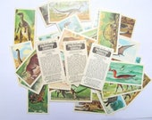Prehistoric Animals Brooke Bond tea cards: pack of 46 vintage cards. Collectible ephemera or for use in craft, scrapbook, collage OT549A