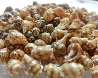 Tiny Sea Shell Beads Mix- Dark Nassa Spiral Shells - Small Dark Brown Speckled Shells - Zigzag Seashell Beads
