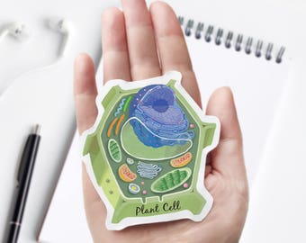 Plant Cell Cross Section Vinyl Sticker, unique science decal