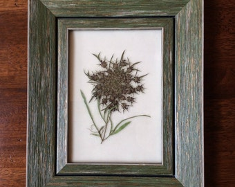 Framed Original Pressed Flower Artwork - Queen Anne's Lace