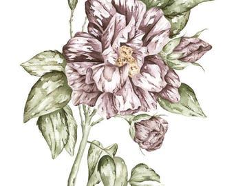 Botanical Plum Rose