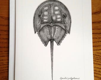 4.25x5.5 Horseshoe Crab Greeting Card