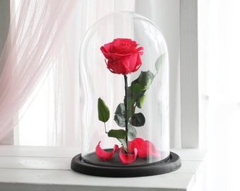 Beauty and the beast rose (Large), Belle Rose, forever pink rose, Enchanted Rose, rose in glass, preserved rose, five  year rose
