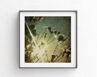 Gallery wall printables, digital art, commercial use photography, picture downloads, Dandelion art, Summer picture, Stock photo Square print