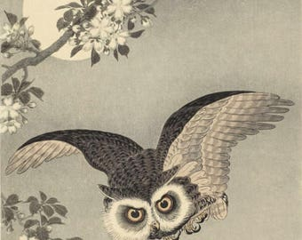 "Japanese Art Print ""Cherry Blossoms and Owl"" by Ohara Koson, woodblock print reproduction, fine art, asian art, cultural art, full moon"