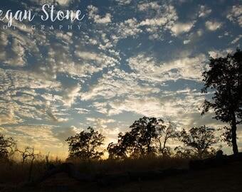 Oak Tree Silhouette - Digital Download