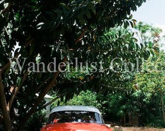 Viñales, Cuba | Classic Car Under Tropical Tree - Fine Art Photography Print