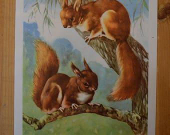 1950s Vintage Squirrel Illustration - Farmyard Friends