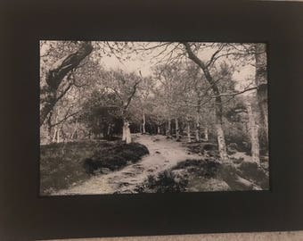Forest Adventure 12X8 Photograph in a black mounted frame